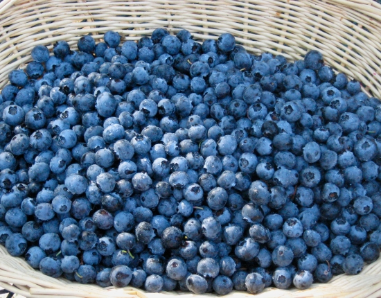 Photo of Fresh-Picked Blueberries