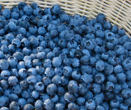 Fresh Blueberries in Basket